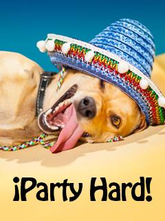 Sombrero Dog
